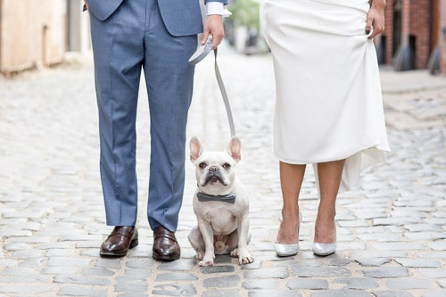 french bulldog in wedding photo in hoboken, nj