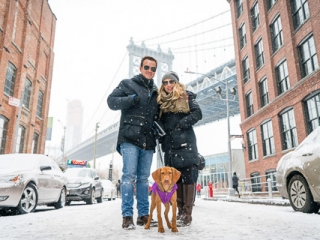 vizsla puppy dog in the snow in brooklyn dumbo, with the manhattan bridge